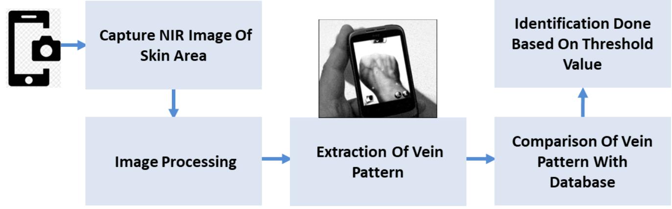 Dorsal Hand Vein Pattern